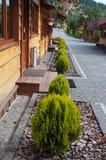 Little green arborvitae grow near a wooden house Stock Image
