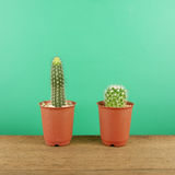 The little green cactus in small brown plant pot on brown wooden planks Royalty Free Stock Photography