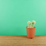The little green cactus in small brown plant pot on brown wooden planks Stock Images