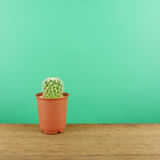 The little green cactus in small brown plant pot on brown wooden planks Royalty Free Stock Image