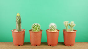 The little green cactus in small brown plant pot on brown wooden planks Stock Photography