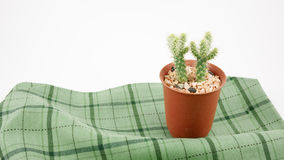 The little green cactus in small brown plant pot Royalty Free Stock Photography