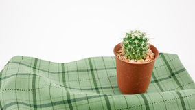 The little green cactus in small brown plant pot Royalty Free Stock Image