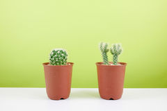 The little green cactus in small brown plant pot Stock Images