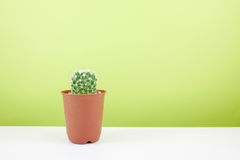 The little green cactus in small brown plant pot Stock Photo