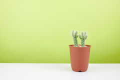 The little green cactus in small brown plant pot Royalty Free Stock Photos