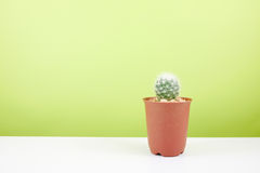The little green cactus in small brown plant pot Stock Image