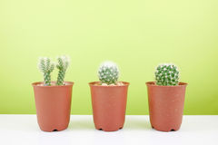 The little green cactus in small brown plant pot Royalty Free Stock Images