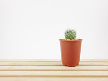 The little green cactus in small plant pot on wooden tray Stock Photos