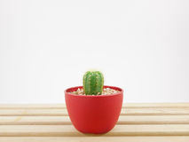 The little green cactus in small plant pot on wooden tray Stock Image