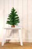 Little green fir tree Royalty Free Stock Photos