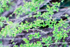 Little green flowers. On a gray background Royalty Free Stock Photo