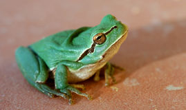 Little green frog. Looking up stock photos