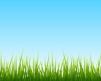 Little green grass, blue sky seamless background. Vector illustration Royalty Free Stock Photography