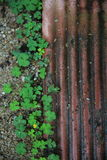 Little green leaves beside old brick. Little lovely green leaves beside old brick soft focus for background Royalty Free Stock Photo