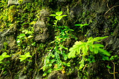 Little green leaves plant on big stone Stock Photos