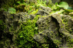Little green leaves plant on big stone Royalty Free Stock Photo