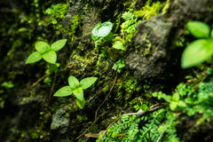 Little green leaves plant on big stone Royalty Free Stock Image
