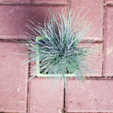 Little green plant. Top view of a little plant in front of brick ground Stock Photography