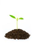 Little green plant Royalty Free Stock Photo