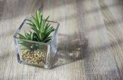 Little green plant in glass pot on the table with light and shadow style Royalty Free Stock Images