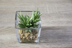 Little green plant in glass pot on the table Royalty Free Stock Image
