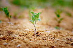 Little green plant Royalty Free Stock Image