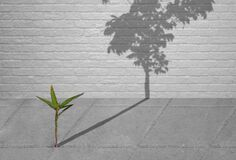 Free Little Green Plant Growing Through Crack Of Pavement With Sunlight And Long Shadow Of Fully Grown Tree On Surface Of Brick Wall Stock Photo - 169263920