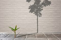 Free Little Green Plant Growing Through From Crack Of Pavement With Long Shadow Of Fully Grown Tree On Surface Of Brick Wall Stock Photo - 170104080