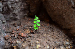 Little Green Plant Stock Images