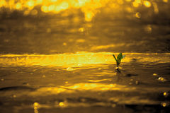 A little green plant about to impact by golden color water wave on golden background. stock photography