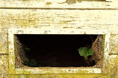 A little green plant tries to survive from a broken window Royalty Free Stock Photography