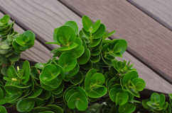 Little green plant on wood background Stock Photography