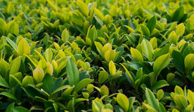 Little green plants. Close up view of little green plants, selective focus Royalty Free Stock Photos