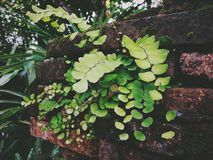 Little green plants Royalty Free Stock Photography