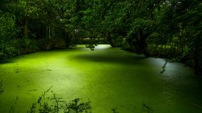 Little green pond in france stock images