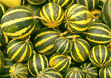 Little green pumkins harvest. Background from little green pumkins with yellow stripes Royalty Free Stock Photography