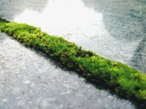 A little green road. Grass in between Royalty Free Stock Images
