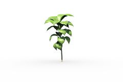 Little green seedling with leaves growing Royalty Free Stock Image