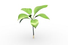 Little green seedling with leaves growing Stock Photo
