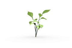 Little green seedling with leaves growing Stock Image