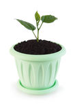 Little green sprout in a flowerpot Stock Images