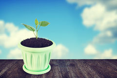 Little green sprout in a flowerpot Stock Photography