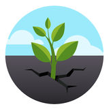 Little green sprout grows through asphalt ground Royalty Free Stock Photo