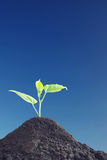Little green sprout grows up against blue sky Stock Images