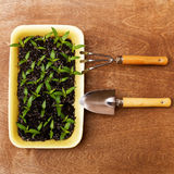 Little Green Sprouts and Small Gardening Tools Royalty Free Stock Image