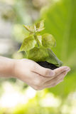 Little green tree in hand Stock Images