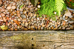 Little green tree and little rock  background, with place your t Royalty Free Stock Photography