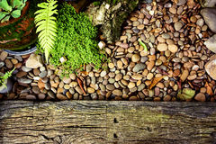 Little green tree and little rock  background, with place your t Royalty Free Stock Photo