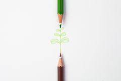 Little green treen by color pencil on paper Royalty Free Stock Photography